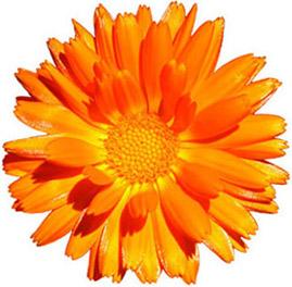 Marigold Health Foods